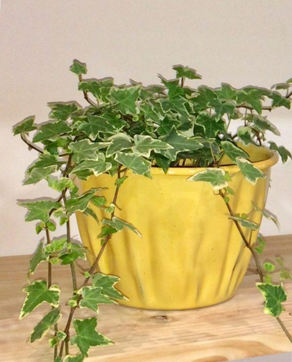 Pot à fleurs émaillé du Guatemala, jaune ocre, nature morte
