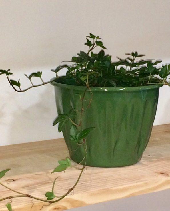 Pot à fleurs émaillé du Guatemala, vert forêt, nature morte